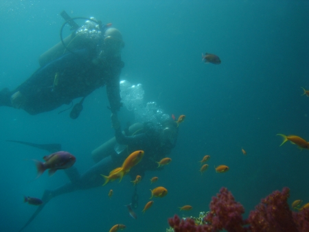 Introductory Diving in Ras Mohammed