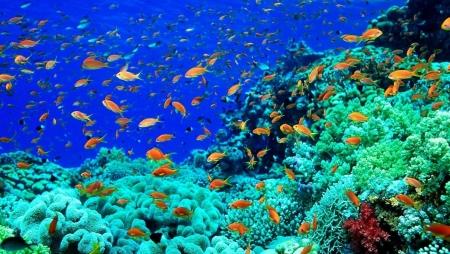 Sharm El Sheikh Coral Reefs