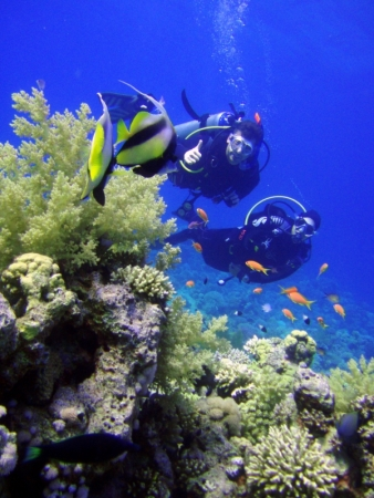 Sharm El Sheikh Introductory Diving