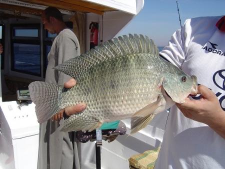 Pêche au Lac Nasser