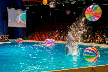Dolphinarium Dubai mit Vögel-Show