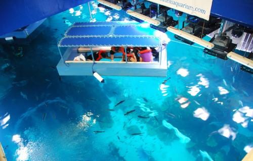 Glass-Bottom Boat Tour in Sharm