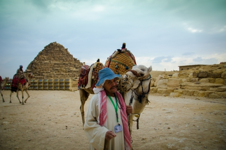 Friendly Camels at the Pyramids, Egypt