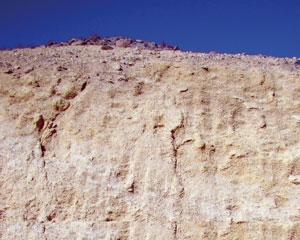 Nummulites in Oman
