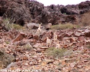 Samhan Mountain of Oman