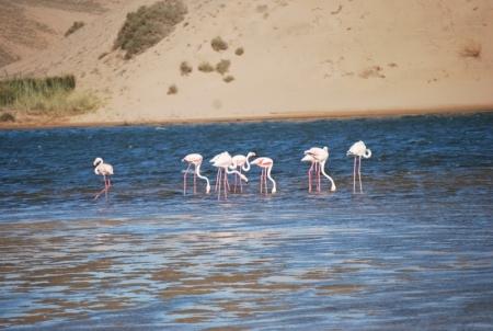 Parco Nazionale di Souss-Massa
