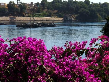 Il Giardino Botanico, Aswan