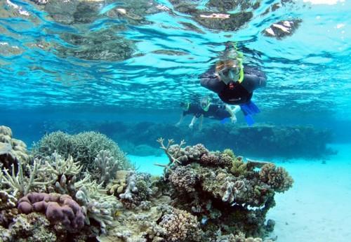 Snorkeling in Dahab Red Sea
