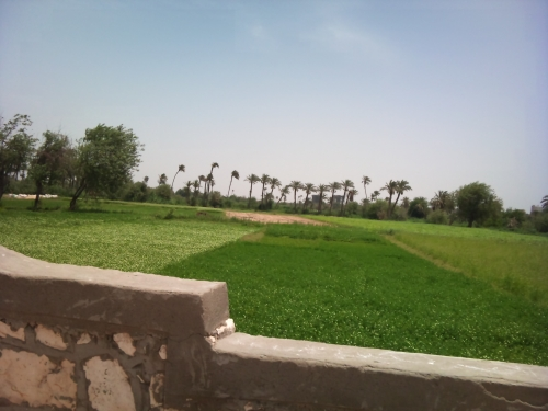 El Fayoum Green Farmlands