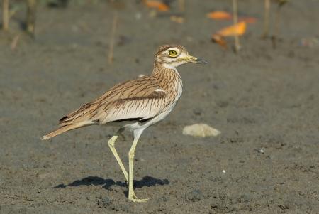 Luxor Bird Watching