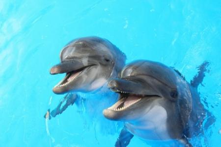 Bodrum Dolphin TouraBodrum Dolphin Swimming