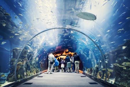 Acquario di Dubai Mall