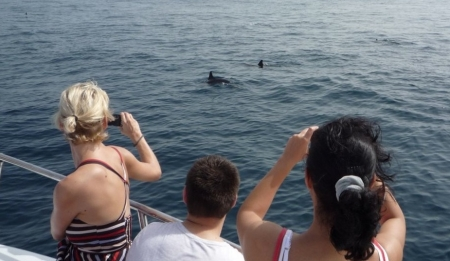 Taking a picture with Dolphins