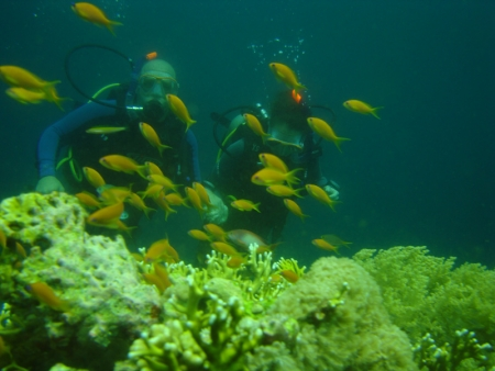 Diving in Sharm, Red Sea