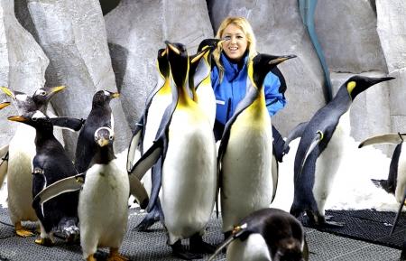 Appuntamento con i Pinguini