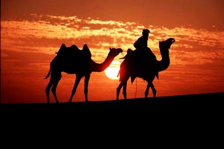 Cammellata nel Deserto di Sharm