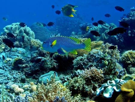 Beautiful Fishes in Taba