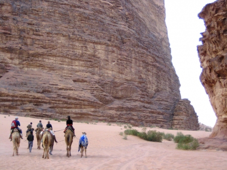 Camel Ride at Wadi Rum Desert