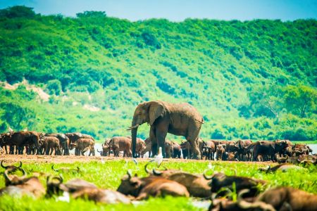 Uganda Travel Guide: Places to Visit in Uganda