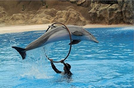 Atracciones y Actividades en Sharm EL Sheikh