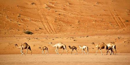 Pacchetti Viaggi Oman