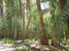 El Oasis de Farafra