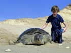 Discover Turtles Beach in Oman