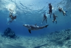 Snorkeling a Dolphin Reef