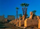 Tour de un día por Luxor