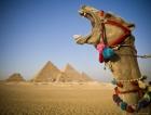 Dois dias no Cairo e Luxor (de avião)