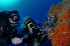 Scuba Diving at Ras Mohamed