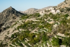 Jebel Akhdar Tour from Muscat