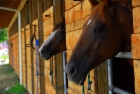 Horse Stable Tour in Dubai