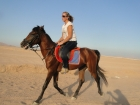 Horse Riding Tour in Sharm Desert