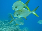 Snorkeling Trip at Hamata Islands From Marsa Alam