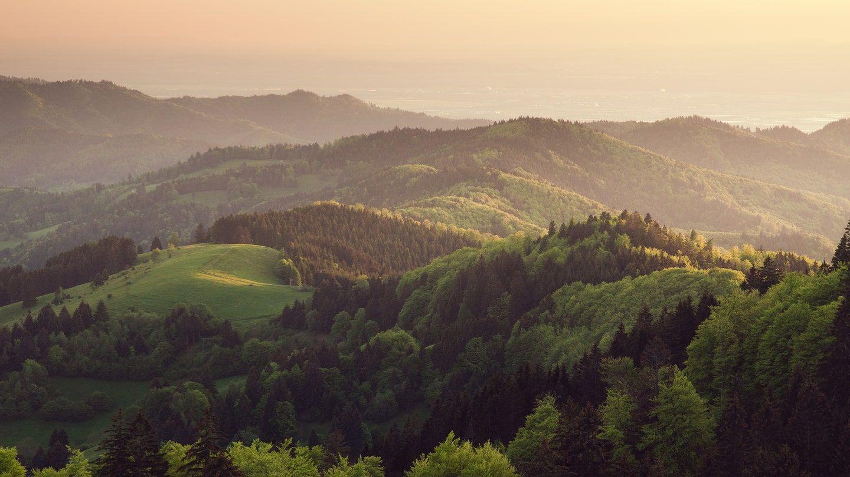 As Maiores Florestas do Mundo | Florestas no Mundo