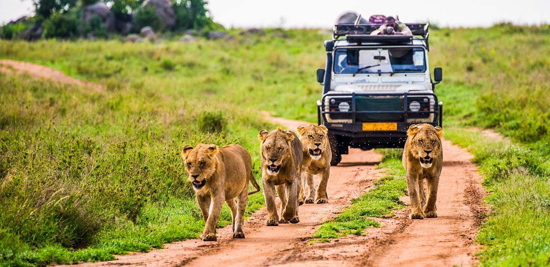 African Safari - Memphis Tours
