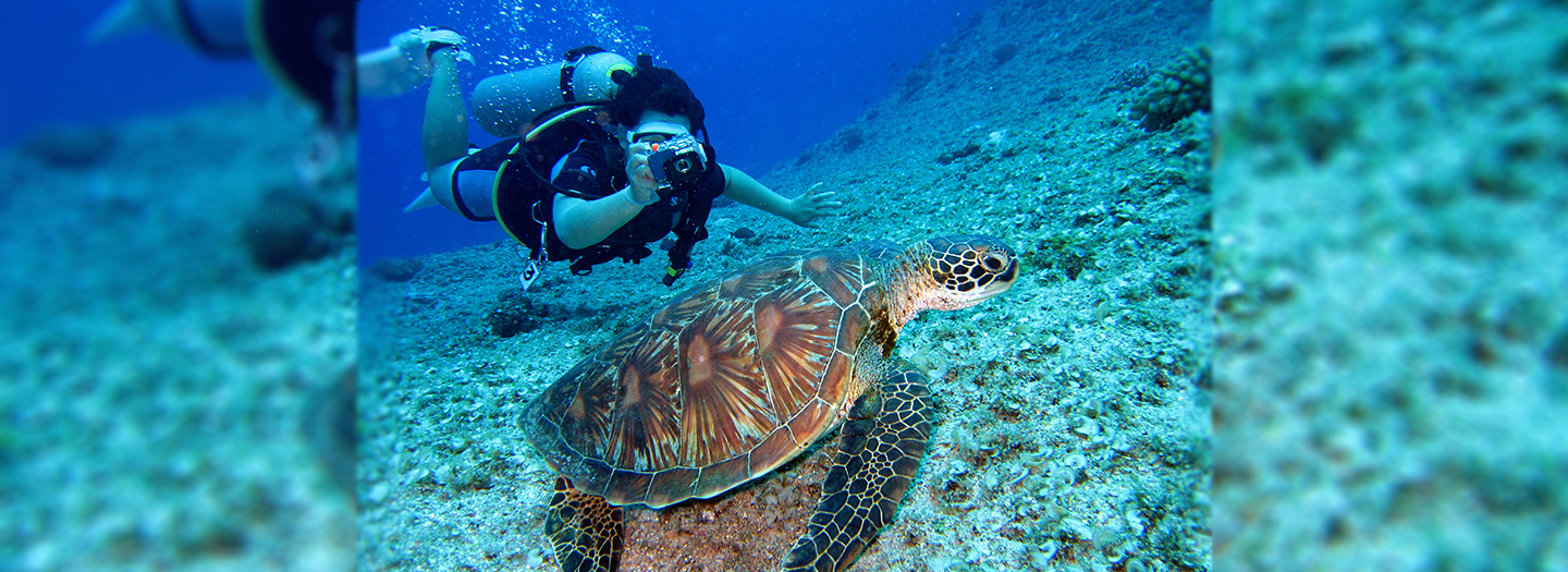 Best Diving in the World | Diving Places | Dive Trips