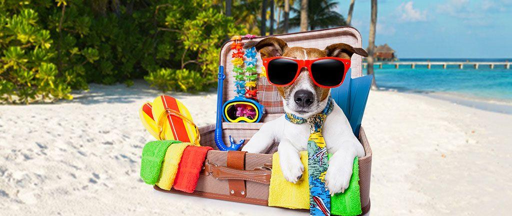 Viajar Com Cachorro | Viajar Com Animal de Estimação
