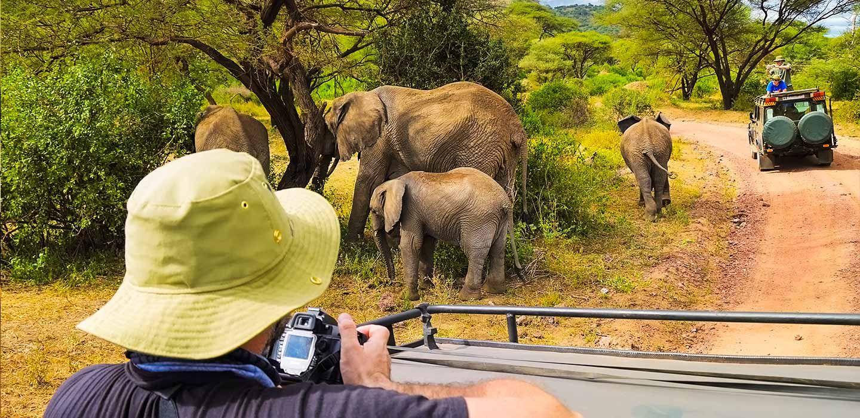 safari afrika, safari, afrika reisen, südafrika safari