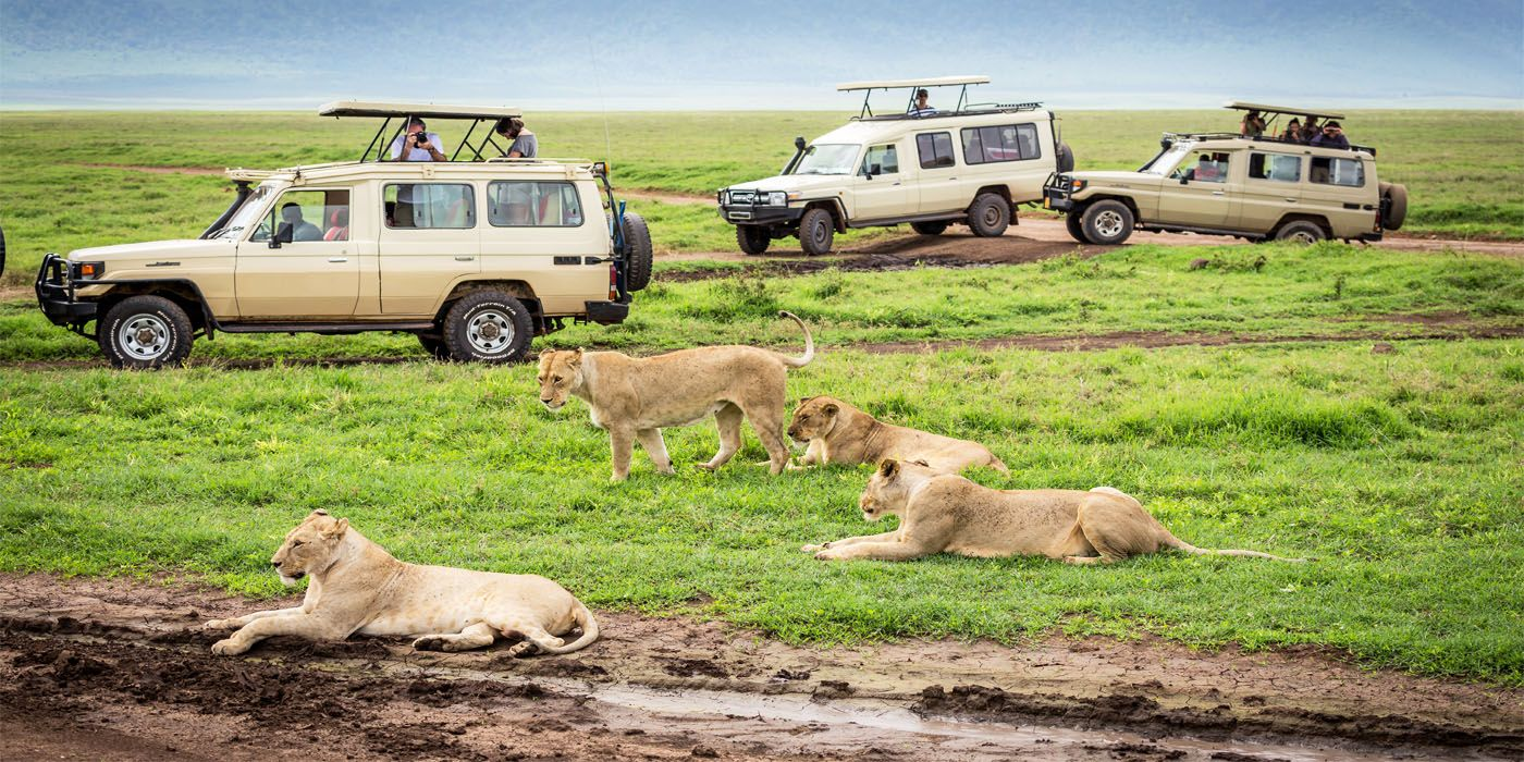 India Animals